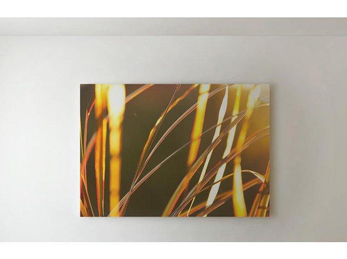 Obraz stébla - 80 x 60 cm